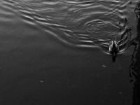 Abschied im Wasser