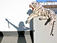 Talking with tigers/ performance art